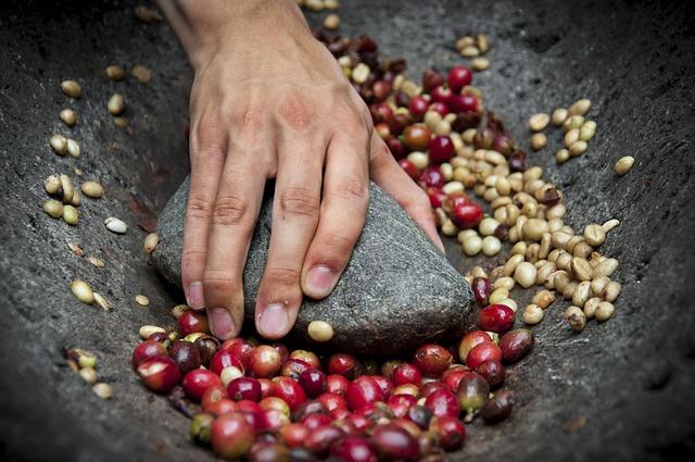 Kávécseresznyék feltörése