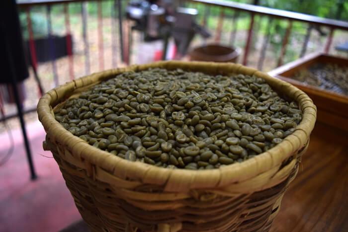 Zöld kávészemek. Valóban segít a zöld kávé a fogyásban?