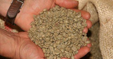 Nyers, zöld kávé